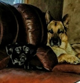 Couch Potato dogs photo