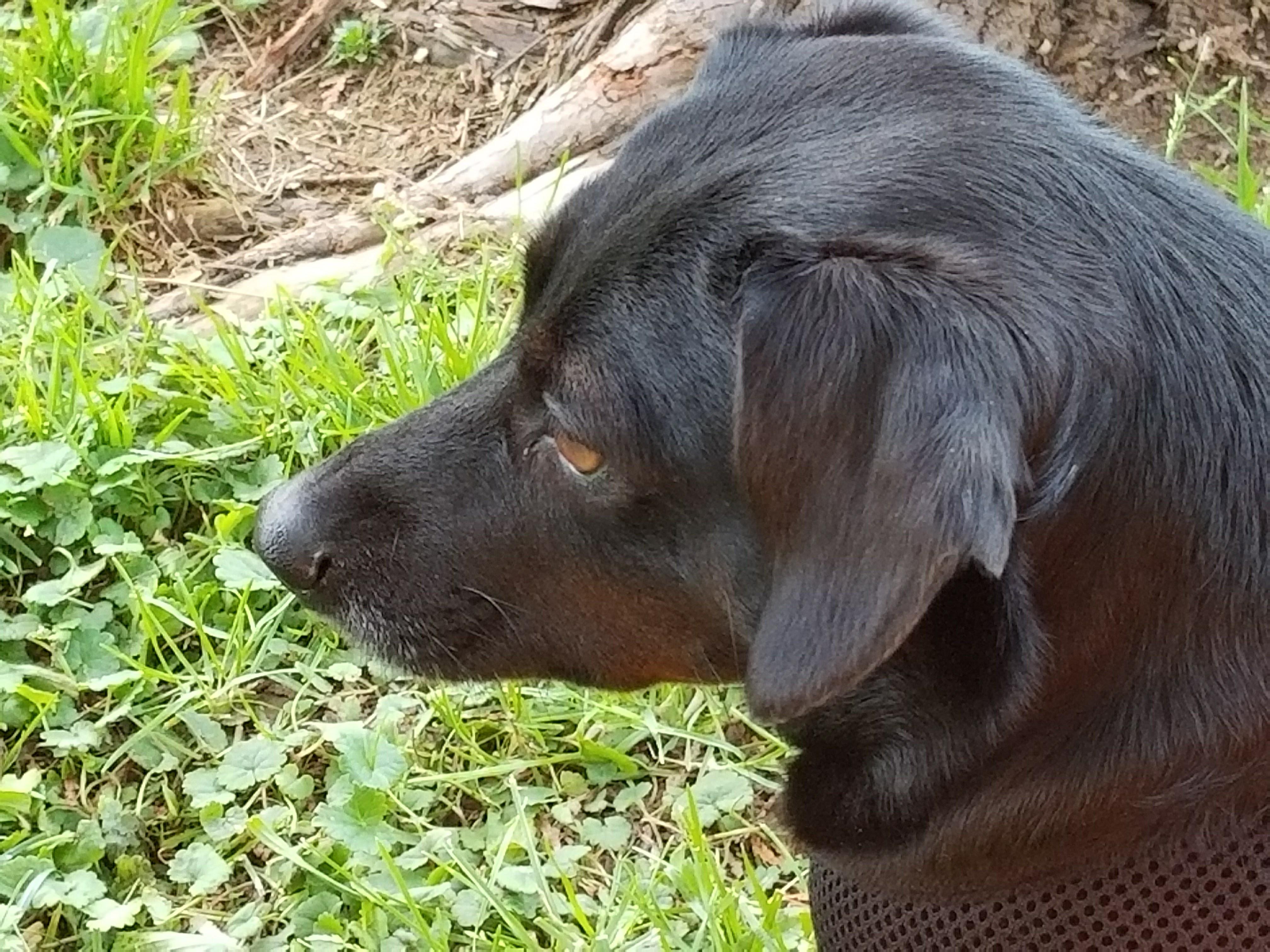 Mini doxie profile pic