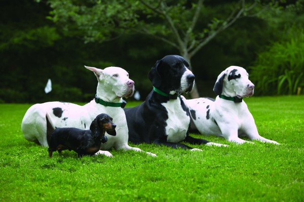 Four different size dogs all with receivers on posing on grass