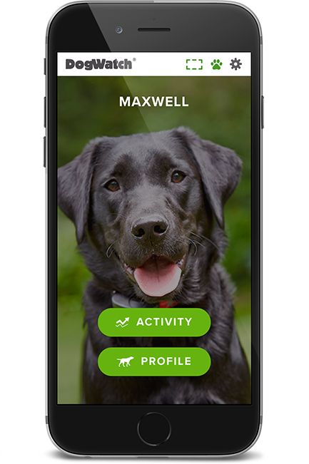 Phone home screen
