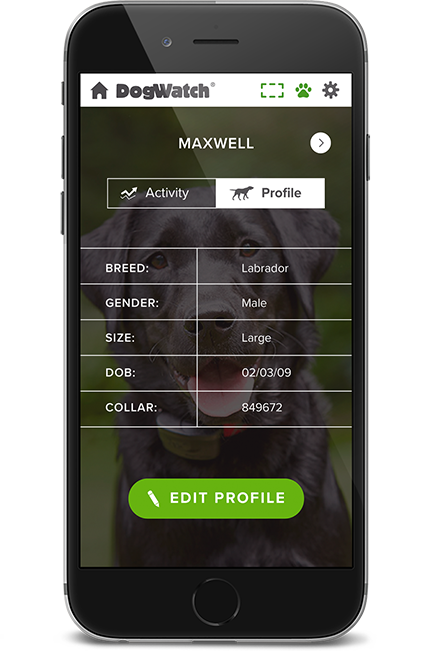 Phone dog profile